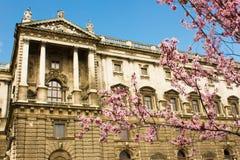 Um ramo de uma árvore de florescência com flores cor-de-rosa na primavera dentro Imagens de Stock Royalty Free