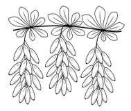 Um ramo de uma baga bonita da b?rberis, uma planta medicinal Bagas ?teis na medicina para cozinhar Imagem gr?fica Vetor ilustração stock