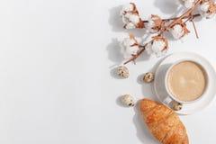 Um ramo do algodão e uma xícara de café com leite em um fundo claro Vista superior Copie o espaço fotos de stock