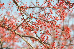Bagas do inverno Imagem de Stock