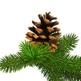 Um ramo do pinho com cone A elevação detalhou o Natal realístico IL ilustração royalty free