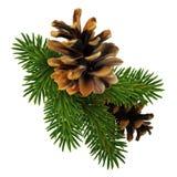 Um ramo do pinho com dois cones A elevação detalhou Christm realístico ilustração royalty free