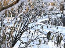 Um ramo do salgueiro verde sob a primeira neve macia em um dia ensolarado foto de stock royalty free