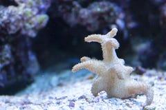Um ramo pequeno separado do coral fotografia de stock