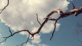 Um ramo seco Fotografia de Stock