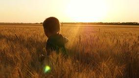Um rapaz pequeno corre através de um wheatfield, experimentando emoções: felicidade, alegria, prazer O conceito da agricultura