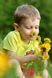 Um rapaz pequeno em um prado completamente dos dentes-de-leão Fotos de Stock