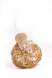 Um rato pequeno curioso na bola decorativa dourada Imagem de Stock