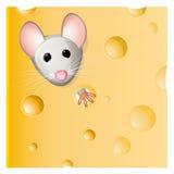 Um rato que come uma parte de queijo Imagens de Stock