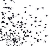 Um rebanho das aves migratórias fotos de stock
