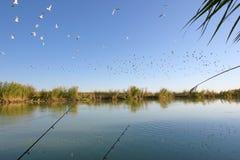 Um rebanho das gaivotas acima de um rio Fotografia de Stock Royalty Free