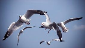 Um rebanho das gaivotas que voam no céu azul Fotografia de Stock