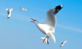Um rebanho das gaivotas voa 9 imagem de stock