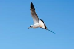 Um rebanho das gaivotas voa 10 foto de stock