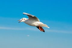 Um rebanho das gaivotas voa 11 imagem de stock royalty free