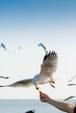 Um rebanho das gaivotas voa 8 fotos de stock royalty free
