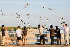 Um rebanho das gaivotas voa 2 imagens de stock