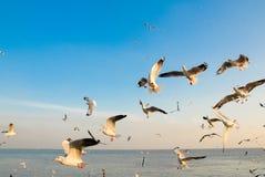 Um rebanho das gaivotas voa 3 imagens de stock royalty free