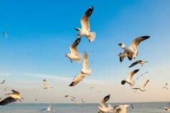 Um rebanho das gaivotas voa 4 fotografia de stock royalty free
