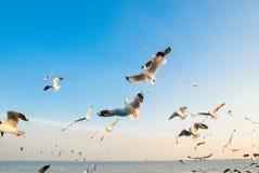 Um rebanho das gaivotas voa 5 imagens de stock royalty free