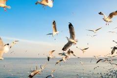 Um rebanho das gaivotas voa 6 Foto de Stock
