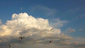 Um rebanho das gaivotas voa contra o céu nebuloso bonito, movimento lento vídeos de arquivo