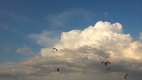 Um rebanho das gaivotas voa contra o céu nebuloso bonito, movimento lento filme