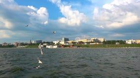 Um rebanho das gaivotas voa contra o céu nebuloso bonito, movimento lento, trava em voo o alimento filme