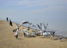 Um rebanho das gaivotas, Yurmala, Letónia Foto de Stock Royalty Free