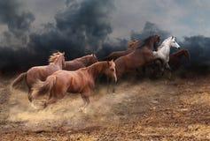Um rebanho de cavalos selvagens Fotografia de Stock