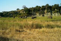 Um rebanho de elefantes africanos em uma paisagem pitoresca fotografia de stock