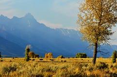 Um rebanho do bisonte em um platô abaixo dos mtns nevado. Fotografia de Stock Royalty Free