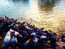 um rebanho do pássaro Imagens de Stock