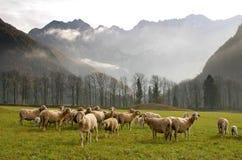 Um rebanho dos carneiros Fotografia de Stock Royalty Free