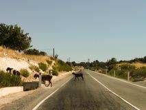 Um rebanho dos carneiros que cruzam a estrada imagem de stock