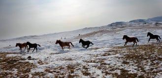 Um rebanho dos cavalos Fotografia de Stock Royalty Free