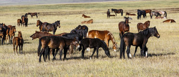 Um rebanho dos cavalos com potros novos Foto de Stock Royalty Free