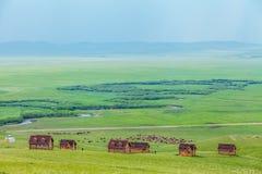 Um rebanho dos cavalos na pastagem imagens de stock royalty free