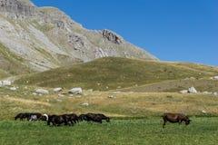 Um rebanho dos cavalos nas montanhas Fotos de Stock Royalty Free