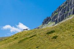 Um rebanho dos cavalos nas montanhas Foto de Stock