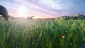 Um rebanho dos cavalos pasta em um prado verde pitoresco em uma manhã bonita da mola, iluminada pelos raios dourados de ilustração stock