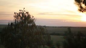 Um rebanho dos corvos que circundam no céu video estoque