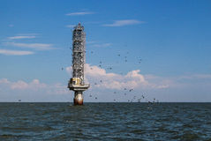 Um rebanho dos pássaros perto do farol no mar de Azov Fotografia de Stock Royalty Free