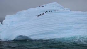 Um rebanho dos pinguins desce a inclinação da geleira para a água filme