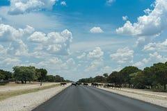 Um rebanho pequeno das vacas cruza a estrada B8 ao sul de Rundu, Namíbia Imagens de Stock Royalty Free