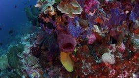 Um recife de corais brilhantemente colorido com esponjas, corais duros e corais macios video estoque