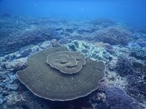 Um recife de corais grande fotografia de stock royalty free