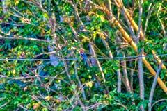 Um rei Fisher, um pássaro tropical, está sentando-se em uma linha elétrica Foto de Stock