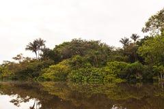 Um relance na reserva dos animais selvagens de Cuyabeno, província de Sucumbios Imagens de Stock