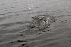Um respingo da água no lago imagens de stock